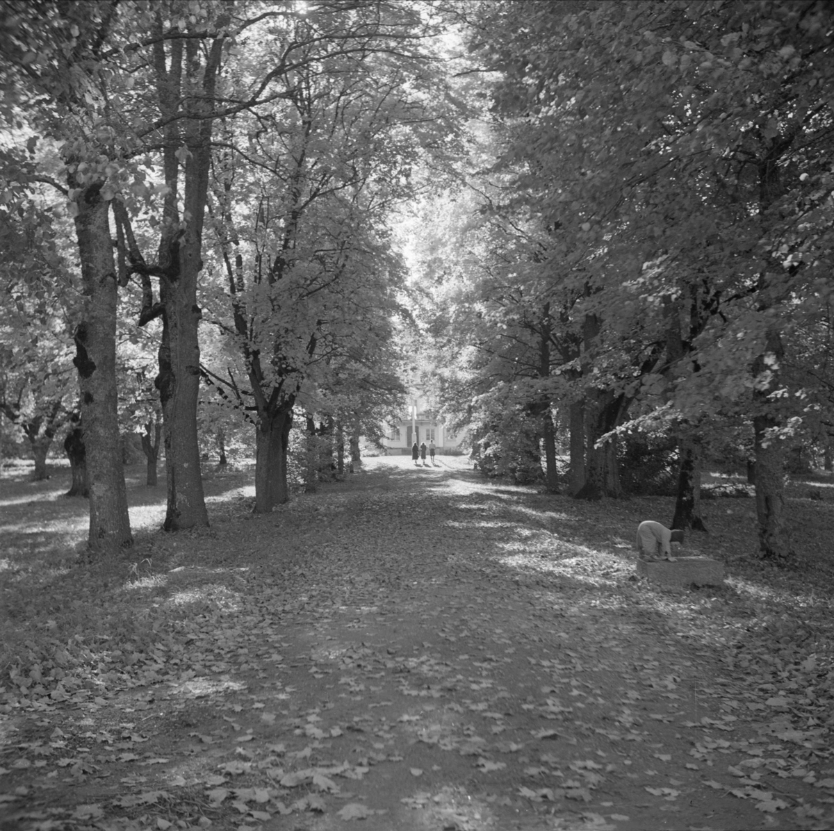 Kungliga Vattenfallsstyrelsen - promenad i parken, hösten 1937
