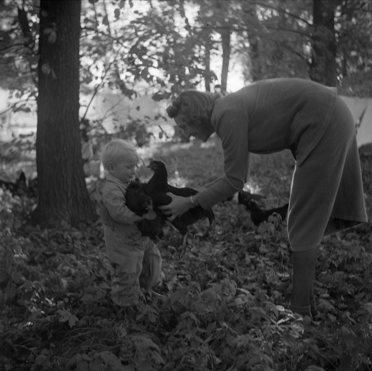 Kungliga Vattenfallsstyrelsen - en kvinna med ett litet barn som bär en höna, hösten 1937