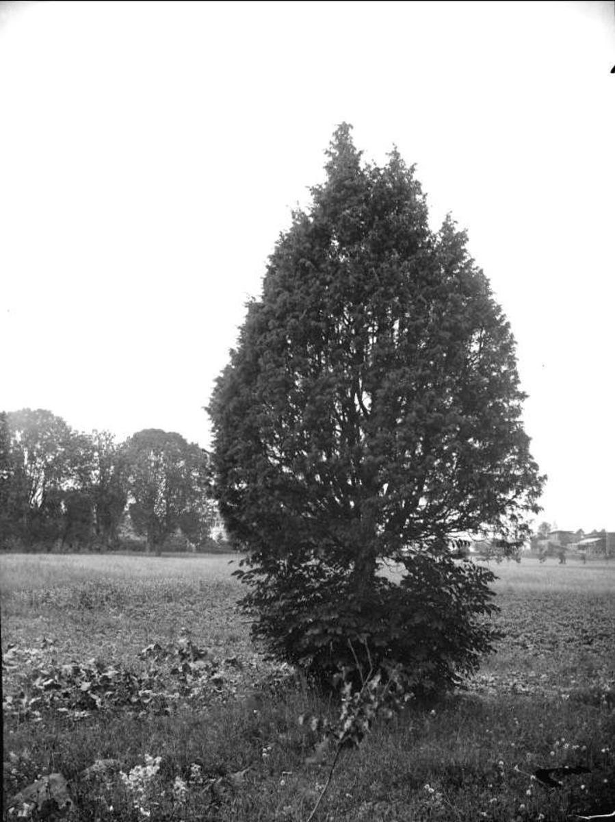 En i Östhammar, Uppland i juli 1915