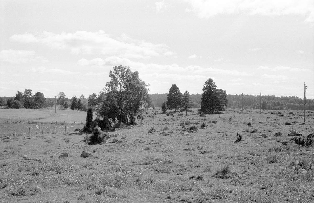 Beteshagar öster om prästgården, Knutby 1:1, Knutby, Knutby socken, Uppland 1987