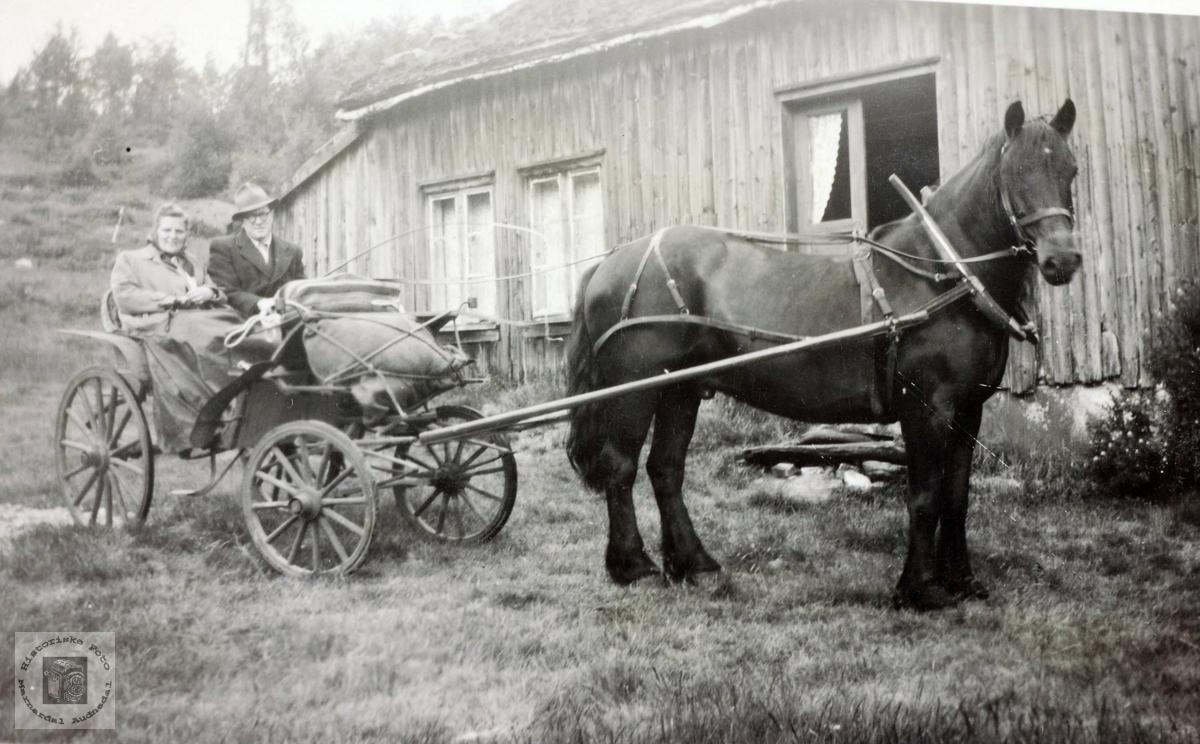 Klar for tur med hest og trille på Iveland, Konsmo Audnedal.