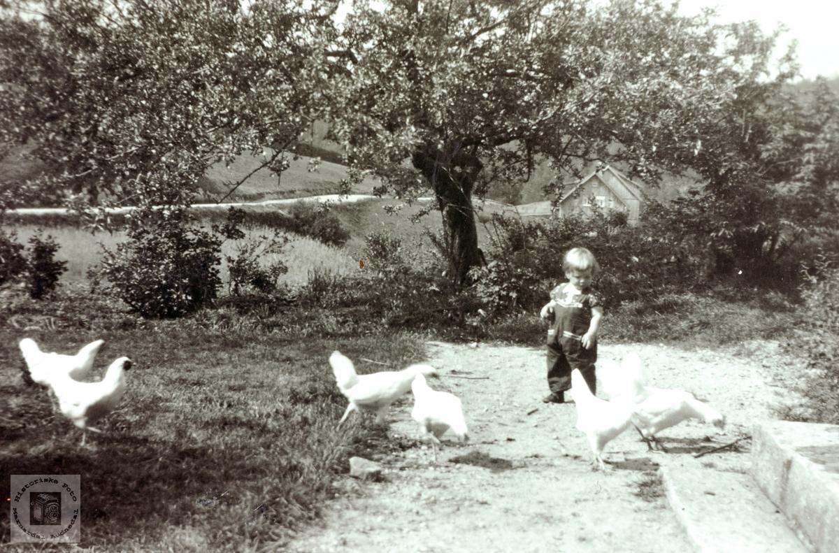 Vil hønene med inn ein tur?