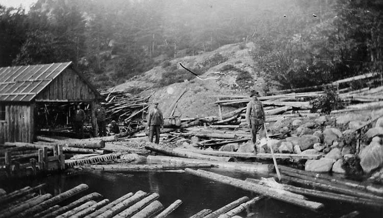 """Enligt medföljande text: """"Sågtimret har körts till Nedre Röra bro och rullats i ån. Fotot visar när stockarna tages upp ur dammen av Johannes Nilsson, Råghagen och Albin""""."""