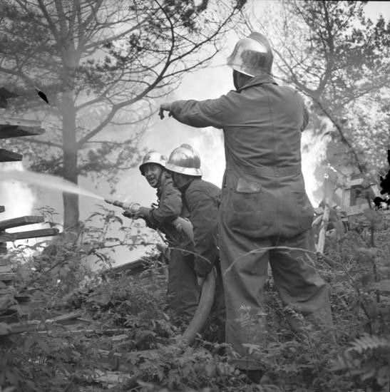 Brandmän bekämpar en eldsvåda i Dalaberg, i norra delen av Uddevalla, juni 1958