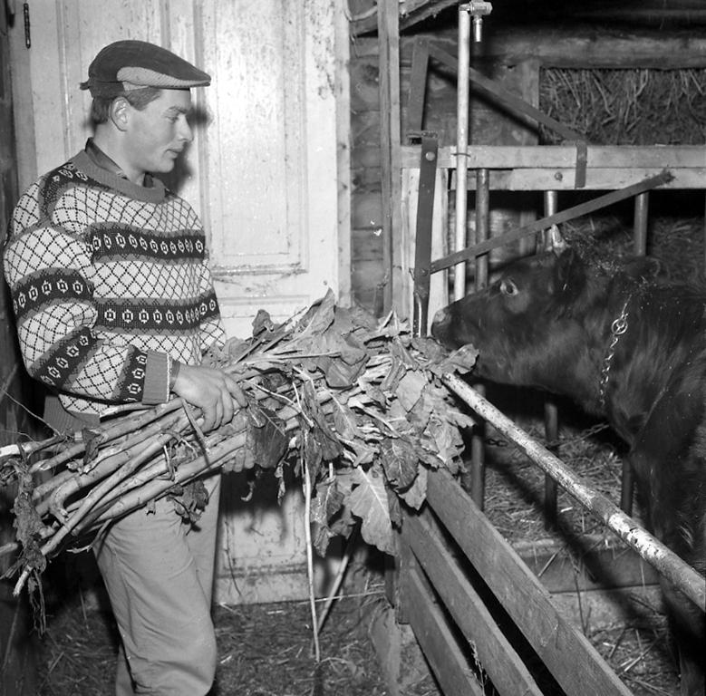 Matning av ko