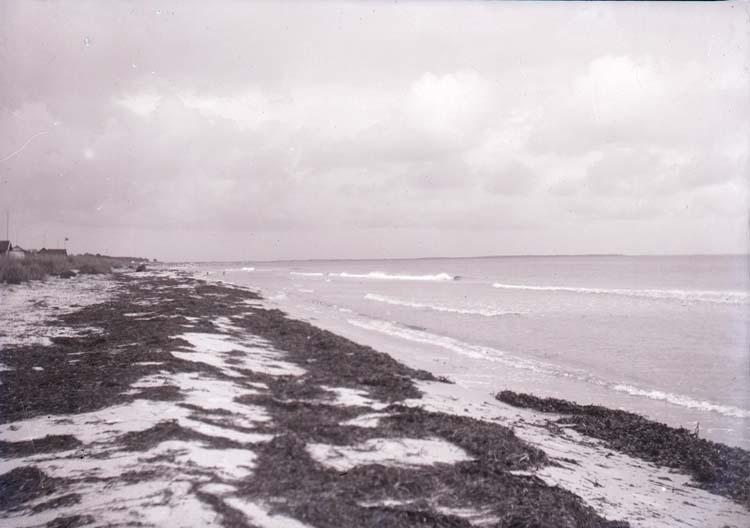 """Enligt text som medföljde bilden: """"Falsterbo, Stranden 2/9 08"""". ::"""