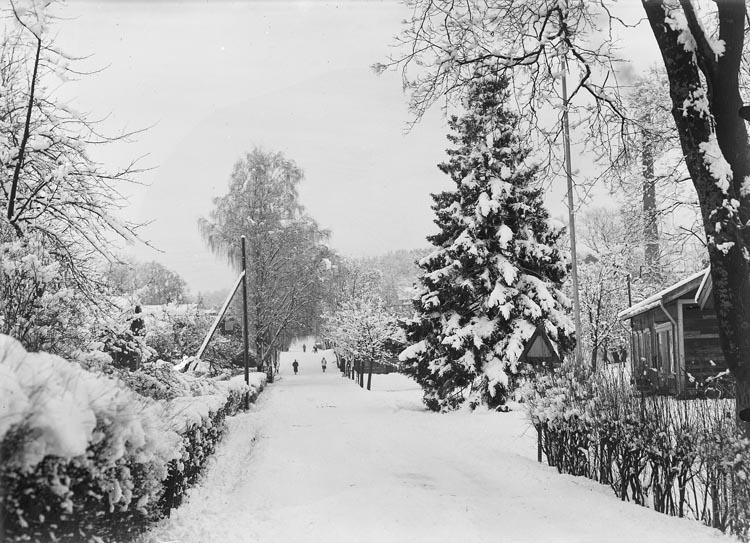 """Enligt fotografens noteringar: """"1950. S. mästare Svahns gran. Stationsmästare vid lilla stationen."""""""