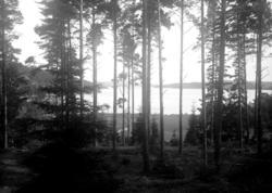 Juli 1924. Vy över N. Bullaren från talldunge vid Långvallsf