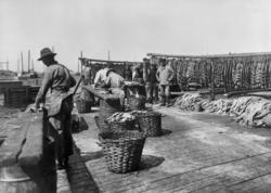 Långaberedning i Skärhamn juli 1924