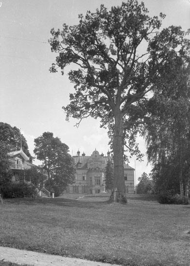 """Uppgift enligt fotografen: """"Uddevalla. Gustafsberg, träd vid villa """"Rotunda."""""""