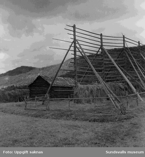 Lada och kornhässja på fäbodvall på södra sidan älven, Österflygge 2:6