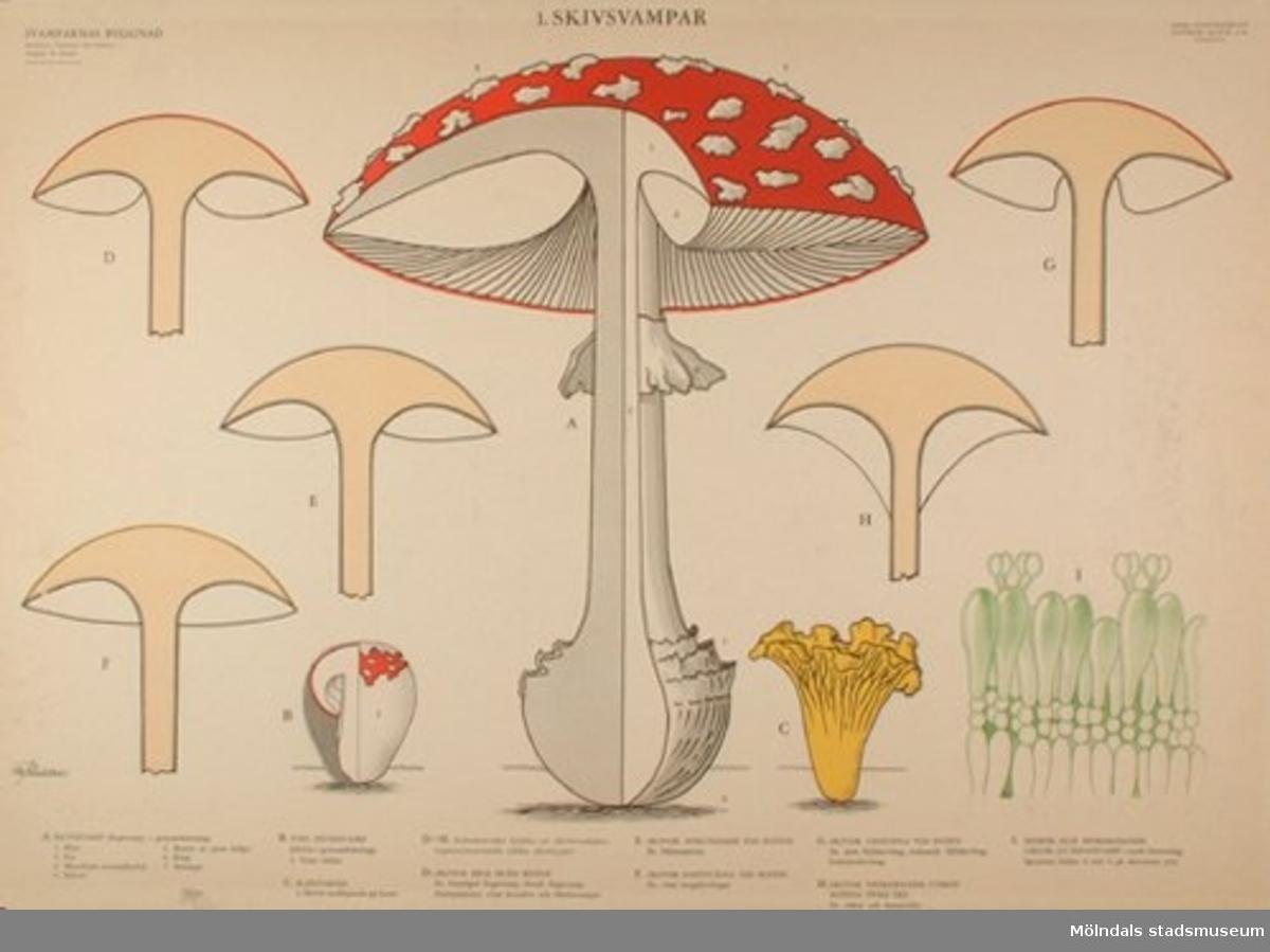 Biologi.:1. Skivsvampar, svamparnas uppbyggnad. Redaktion: Överlärare Nils Karlson. Original: M. Richter. Bröderna Lagerström Offset, Stockholm.