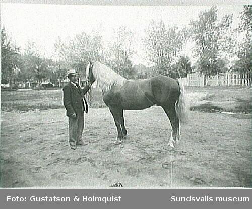 Helge Höglund med häst (e u).