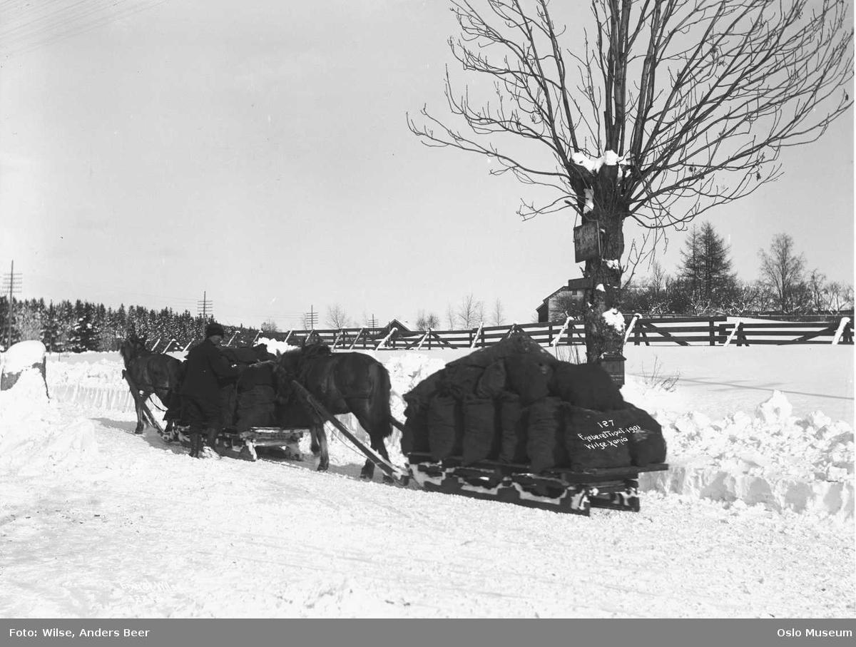 vei, snø, hester, slede, mann, kullkjøring, telefonstolper, kulturlandskap