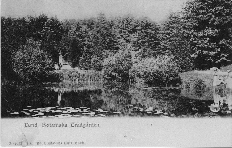 """Enligt text på framsidan """"Lund, Botaniska trädgården""""."""