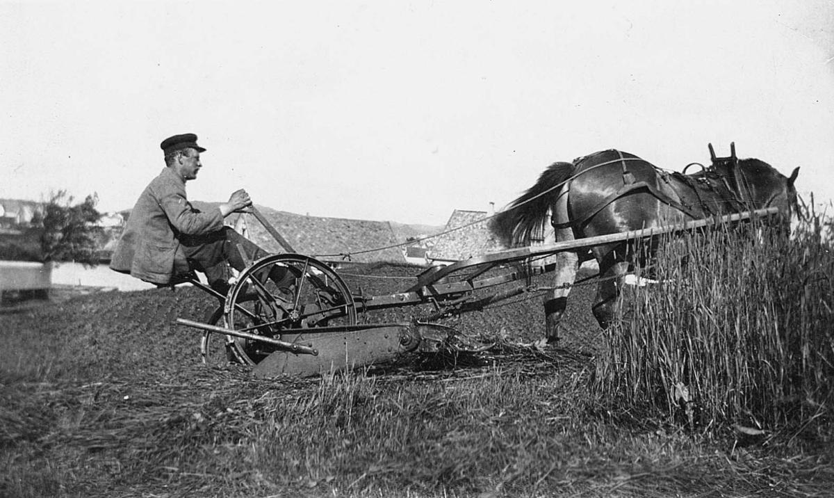 Landskap - Landbruk på Vibrandsøy.