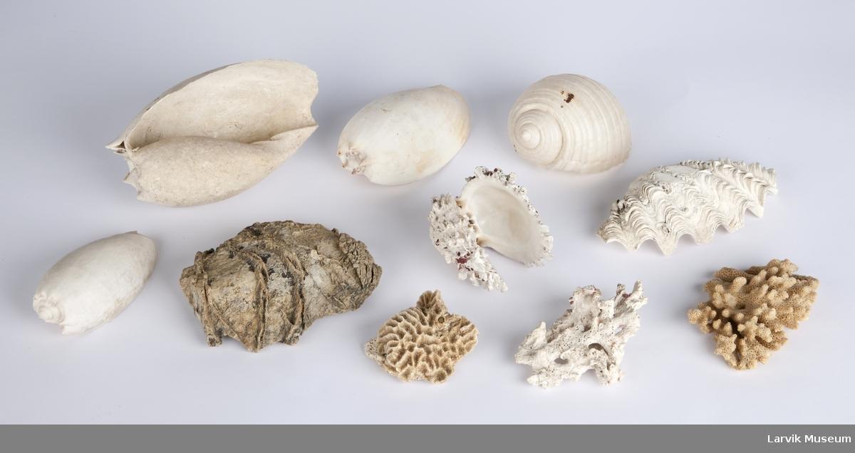 Skjell, koraller