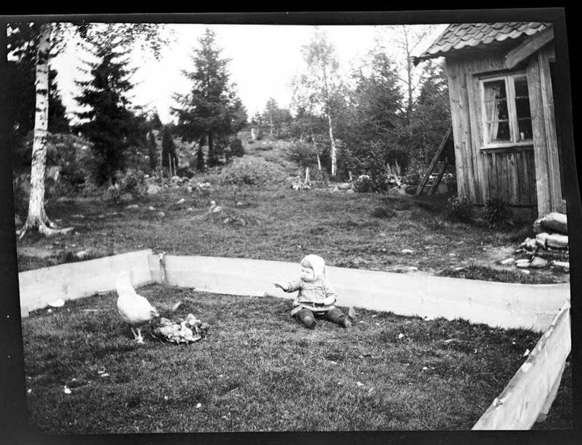 Sven, Hjärtum 1915-05-14, som sitter i en hemmagjord barnhage med höna och kycklingar framför boningshuset.