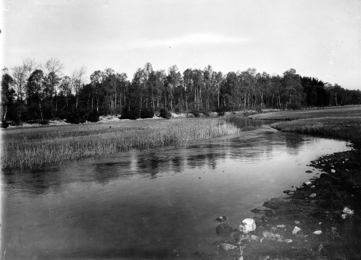 Biotop för enkelbeckasin  Scolopax gallinago,                                  Voxtorp, Halland 19/5 1932