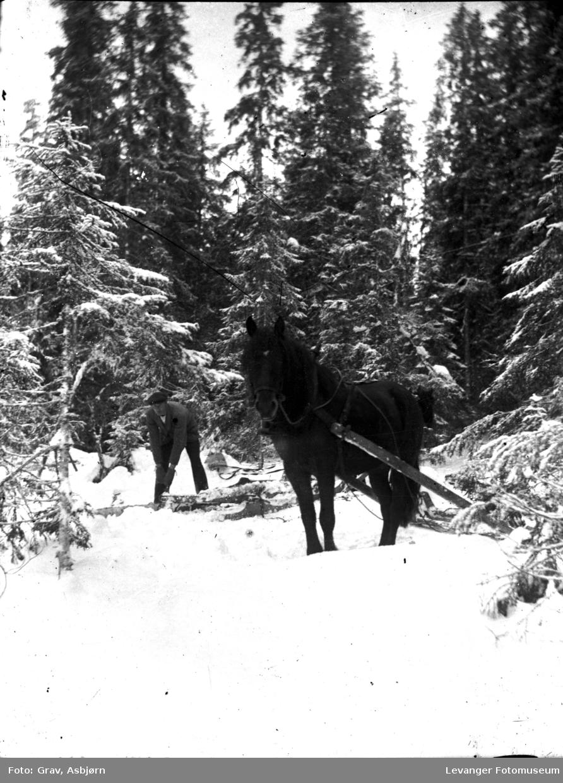 Skogsarbeider med hest
