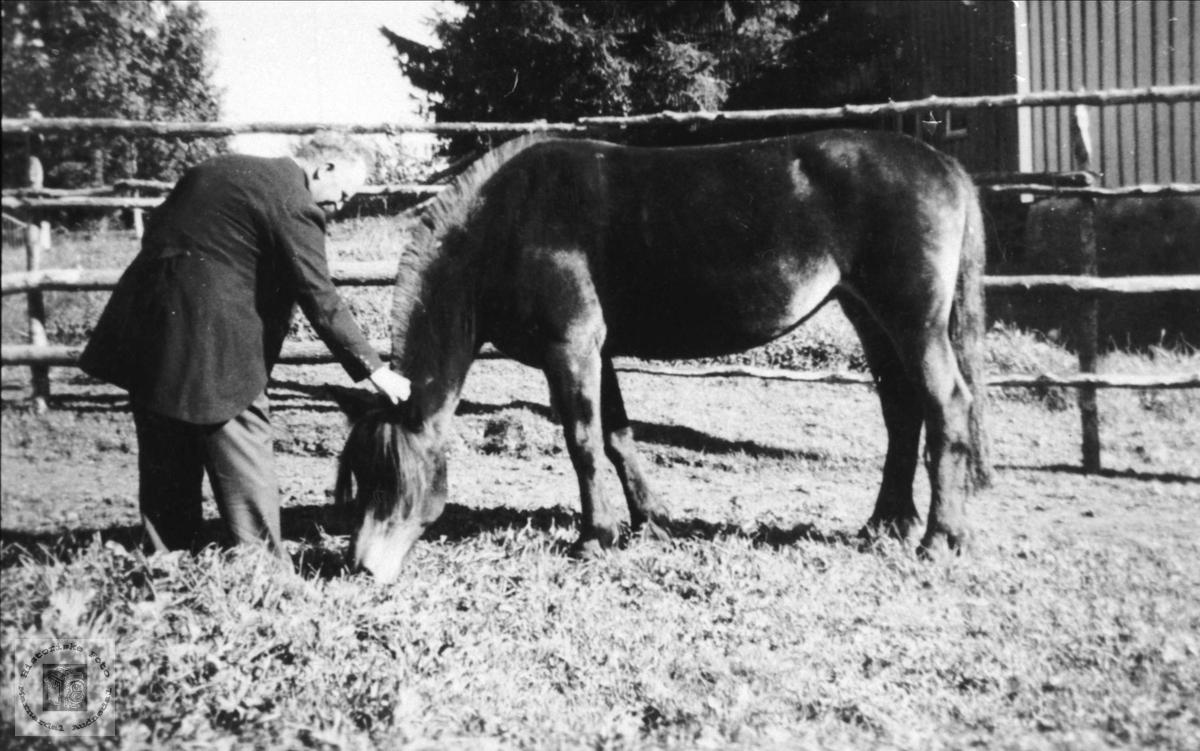 Fasting med hesten