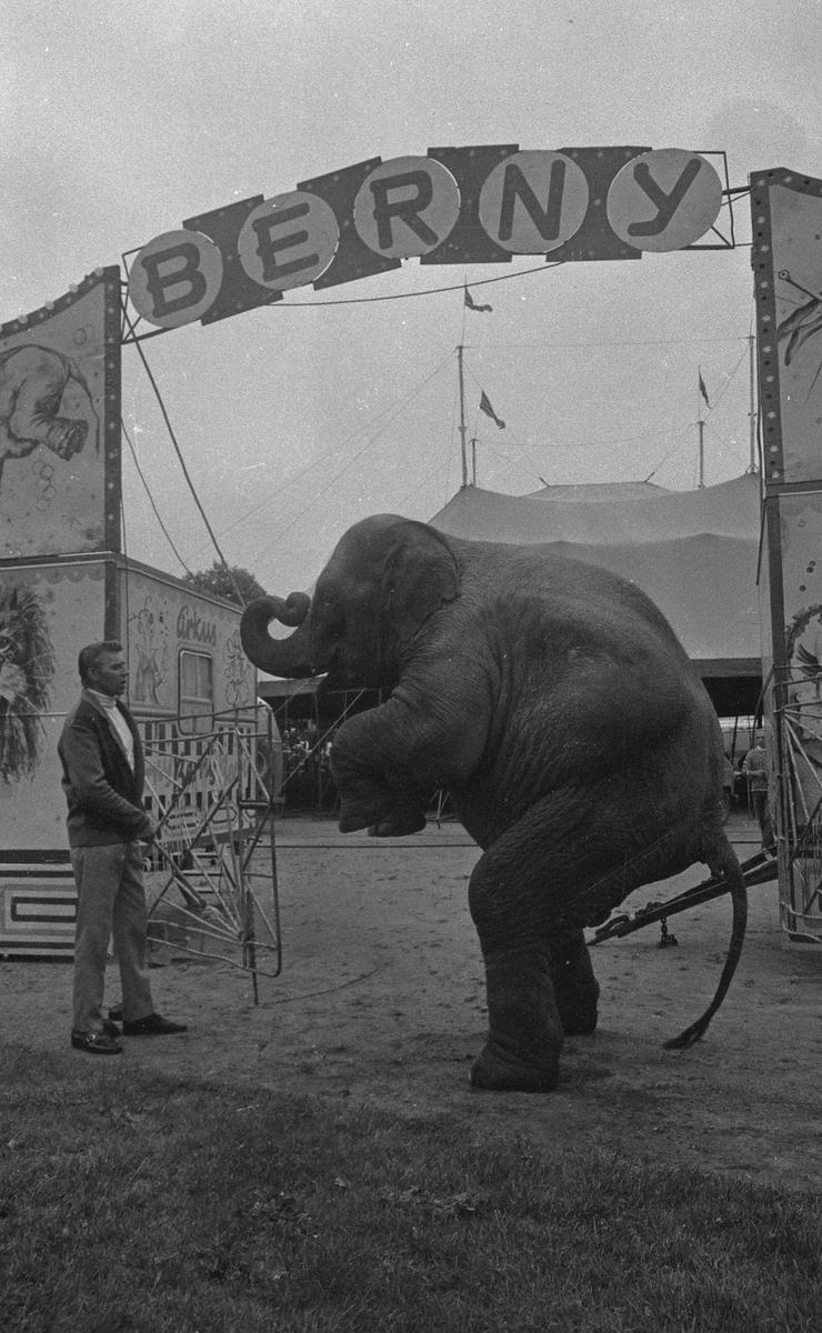 Cirkus Berny