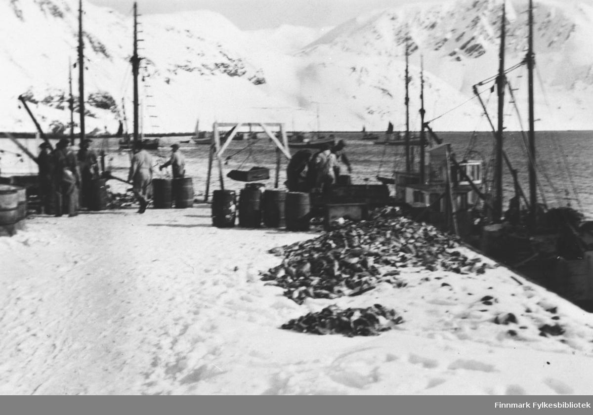Menn jobber med fisk på kaia i Tyfjord. Det ligger mengder av fisk i snø på kaia. To båter ved kaia. Fjellene er ennå dekt av snø.