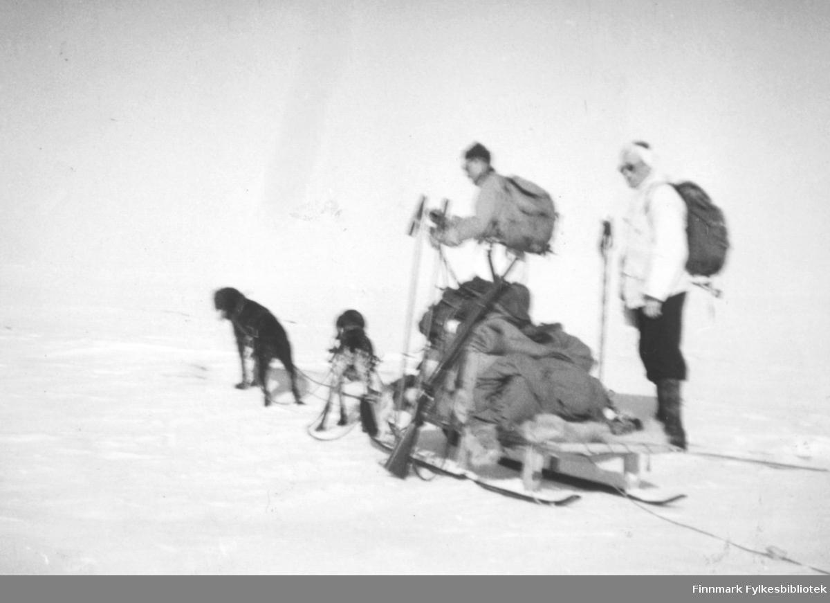 Påsken 1950. Sigbjørn Isaksen, Fritz Ebeltoft og Petter Hildonen gikk på ski fra Vadsø til Tana. De hadde Petter Hildonens hunder med på turen