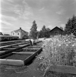 Trädgårdsskolan i Söråker, 1932-1966, disponerade ett stort