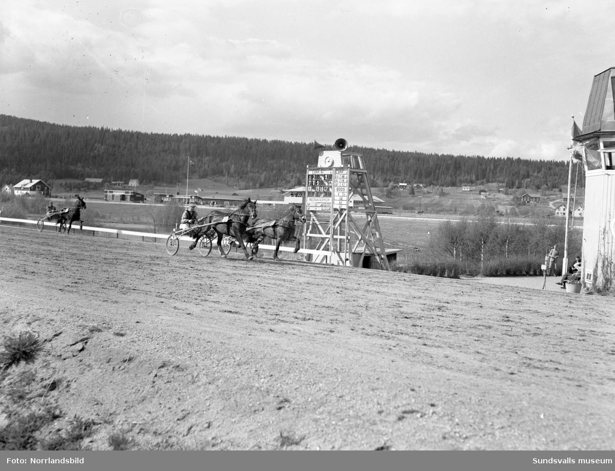 Tävlingar på Bergsåkers travbana.