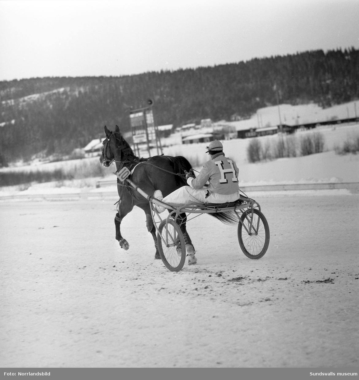 Årspremiär på Bergsåkerstravet.