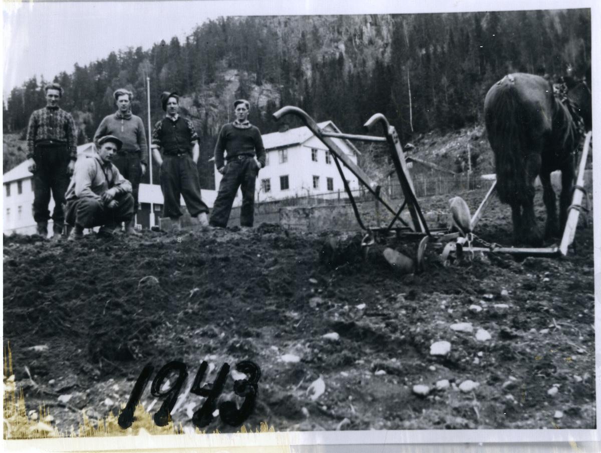 Setting av potet på Rustebakke i Begnadalen, Sør-Aurdal. 5 karer står  oppstilt i åkeren sammen med hest og plog. Gården Rusebakke i bakgrunnen. 1943