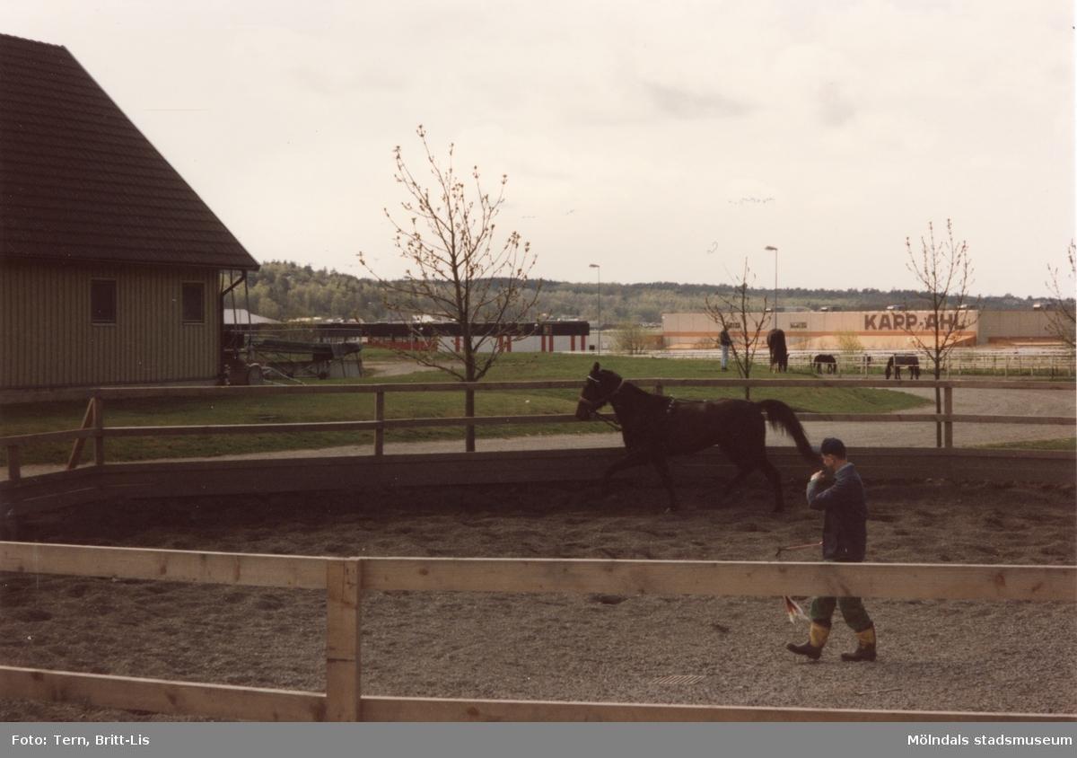 Träning i den såkallade gummigropen på Åby, Kappahls kontor i bakgrunden.   Blandade bilder insamlade inför dokumentation av Åby Stallbacke och Stallgårdar 2015.