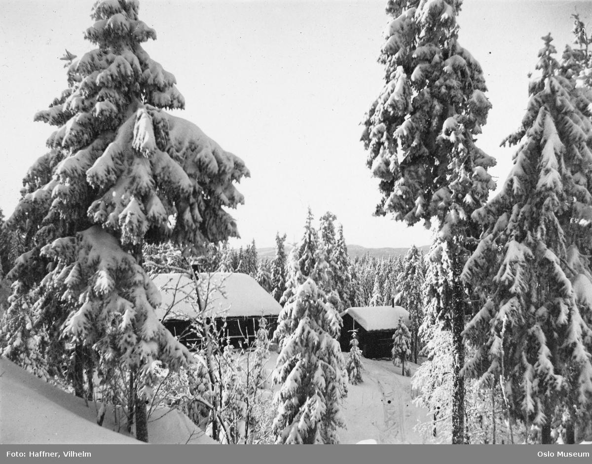 skog, snø, hytte