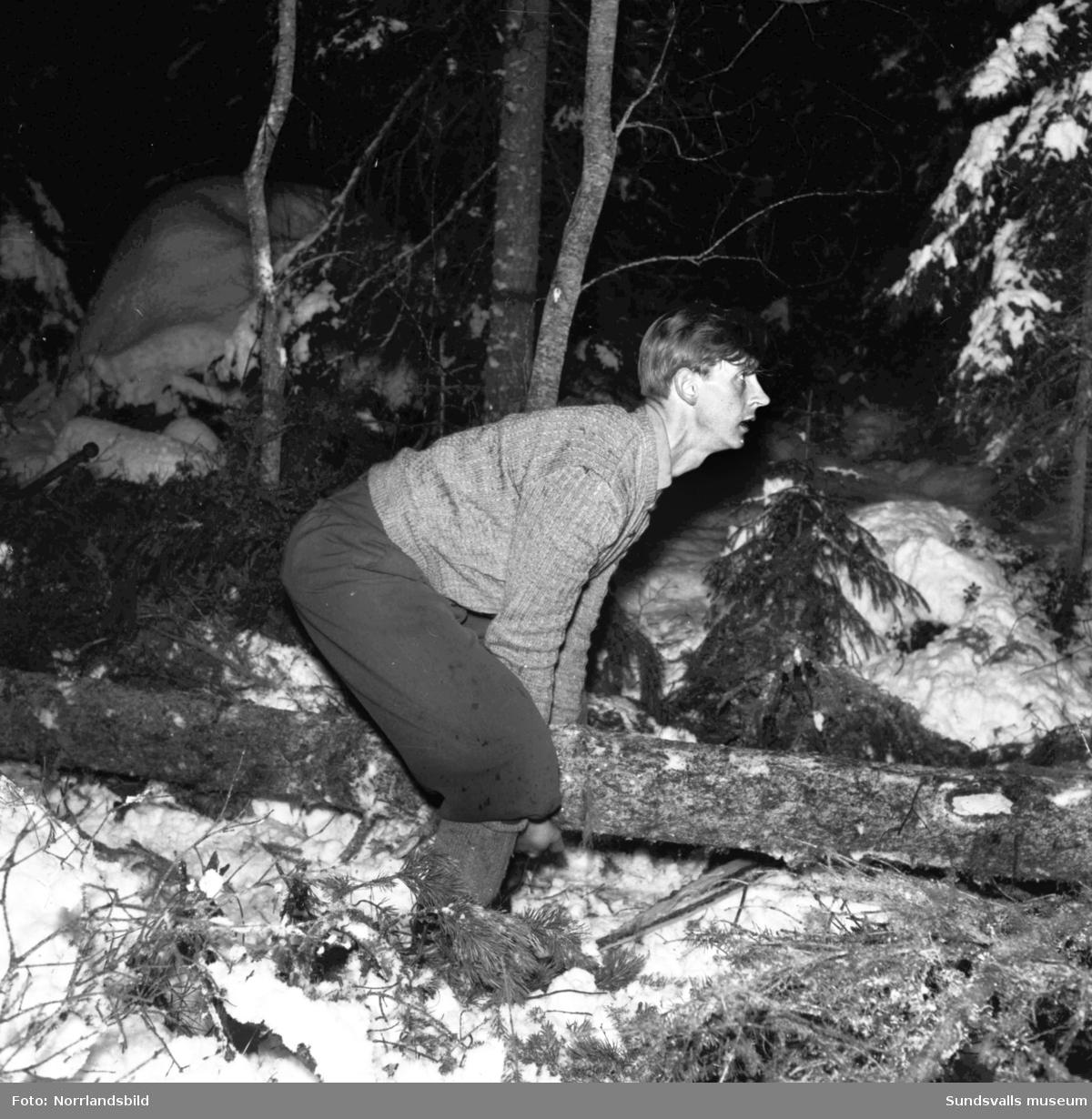 Stavre skogsskola, vintrigt reportage om skogshuggning