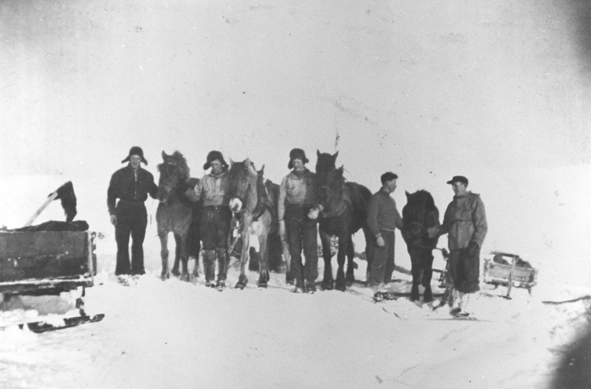 Fem menn med fire hester og et par sleder fotografert på fjellet på vintertid. Mennene har skier på seg.