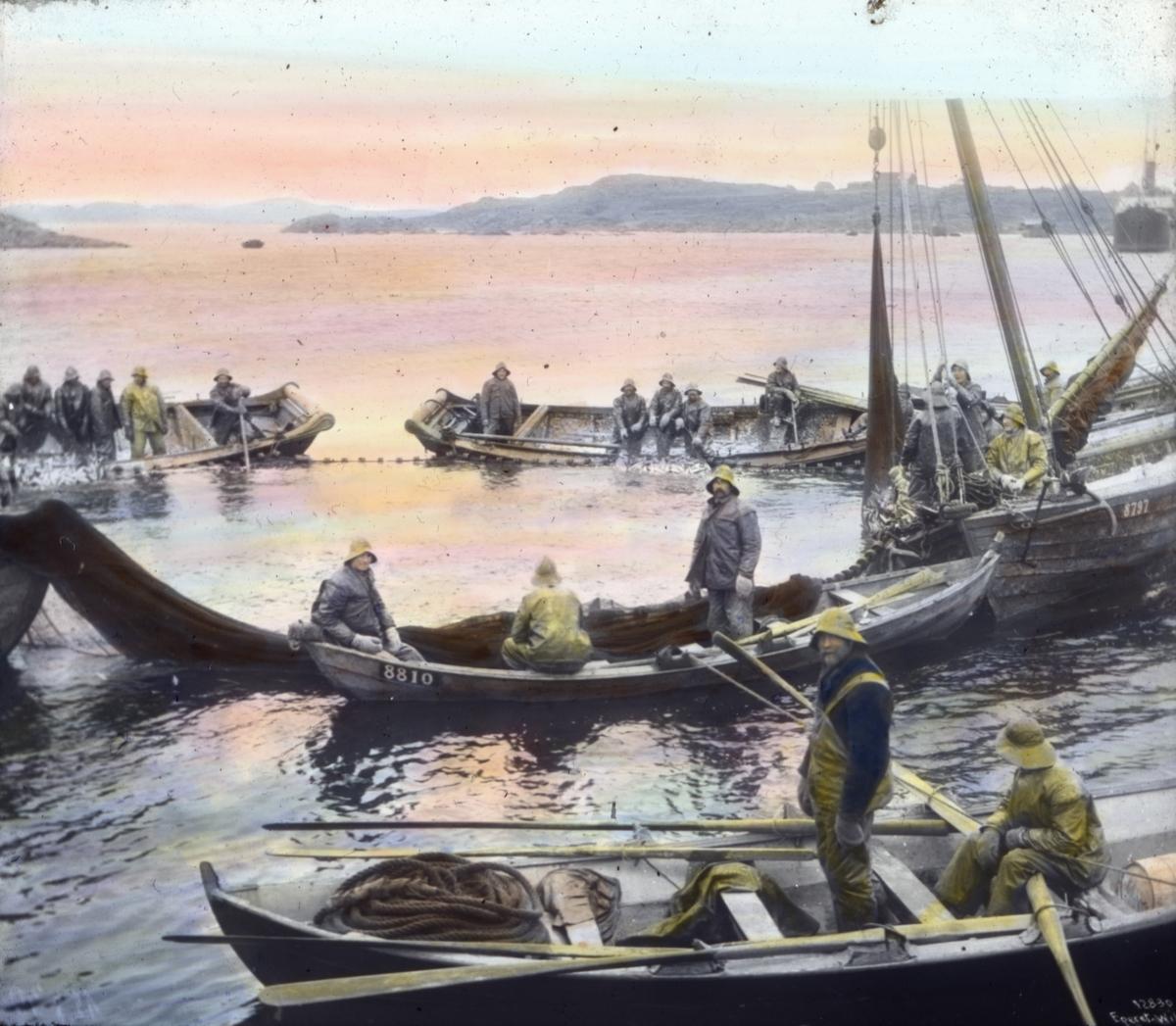 Håndkolorert dias. Flere robåter og en fiskeskøyte ligger omkranset en snurpenot.