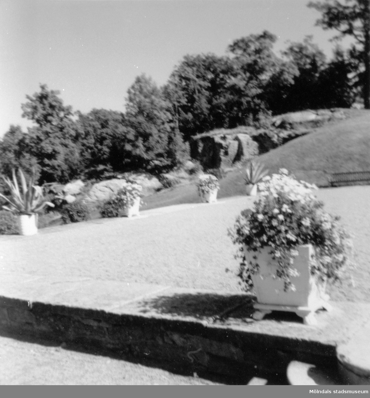 Grusplan samt växter. Gunnebo slott 1970-tal.