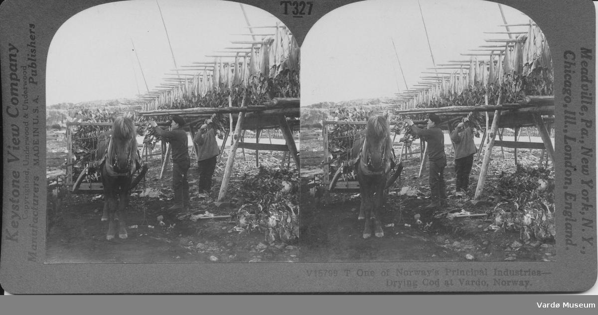 Stereoskopisk bilde Fra en serie informasjonsstereosopiske bilder fra Keystone view company  Utdypende på baksiden