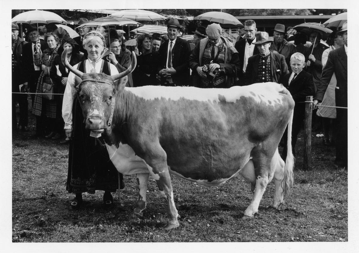 Borghild Glosimot med Teleros 6947.