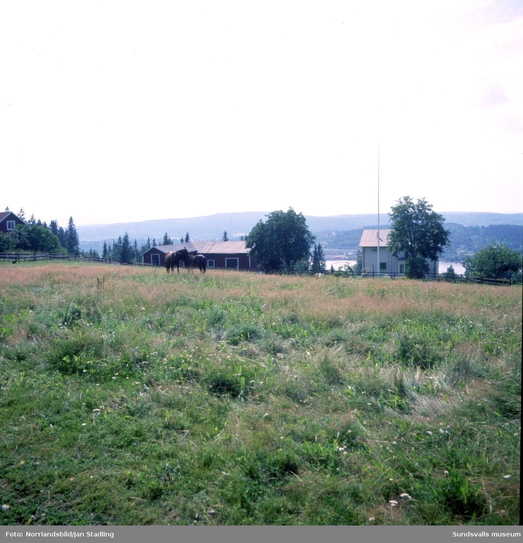 Hästar i hage på ett lantställe vid kyrkan på norra Alnö, fastigheten Rökland 1:31.