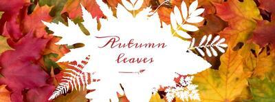Autumn Leaves er tittelen på kammerkoret Vivas høstkonsert.. Foto/Photo