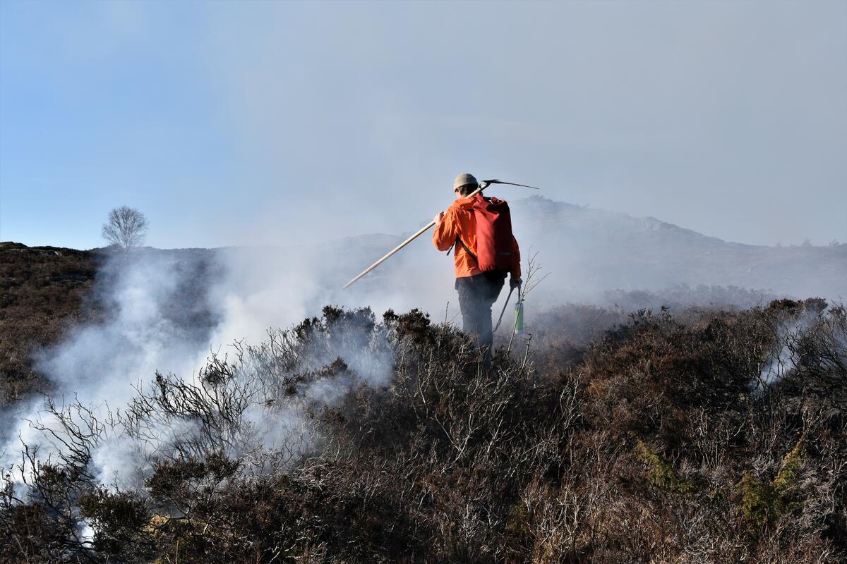 Mann brenn lyng. foto (Foto/Photo)
