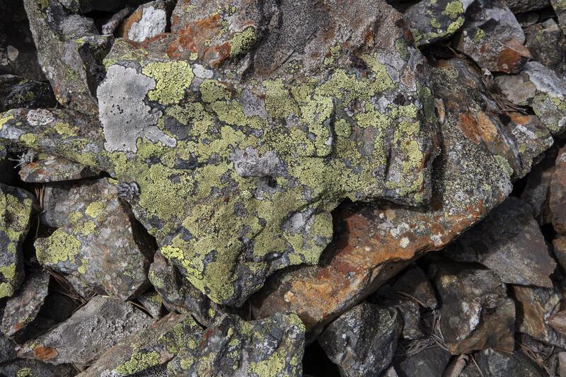 Steinlav på stein i berghald ved Nr. 6. (Foto/Photo)