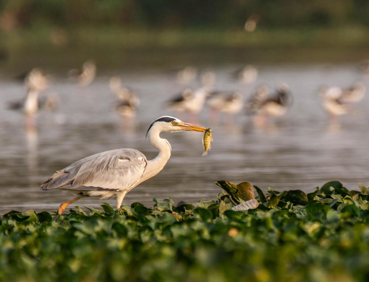 Foto: Sagar / Foto: Sagar