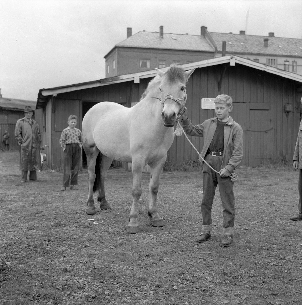 Hestmartnan på Øya