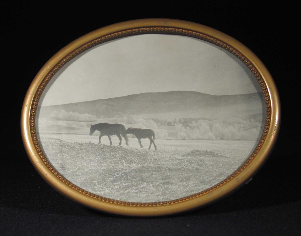 Hest med føll på et jorde.
