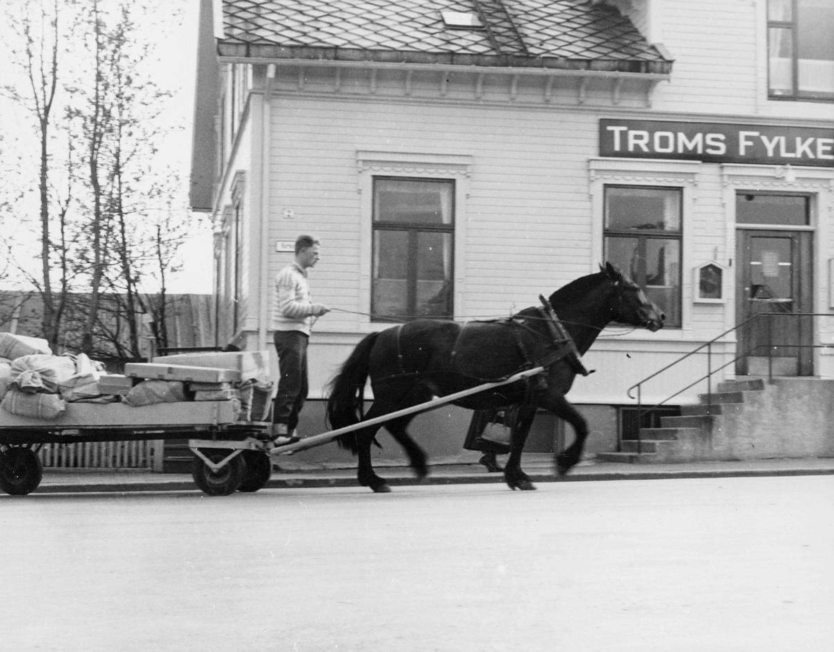 transport, hest, kjerre, mann, postsekker, postpakker, Tromsø