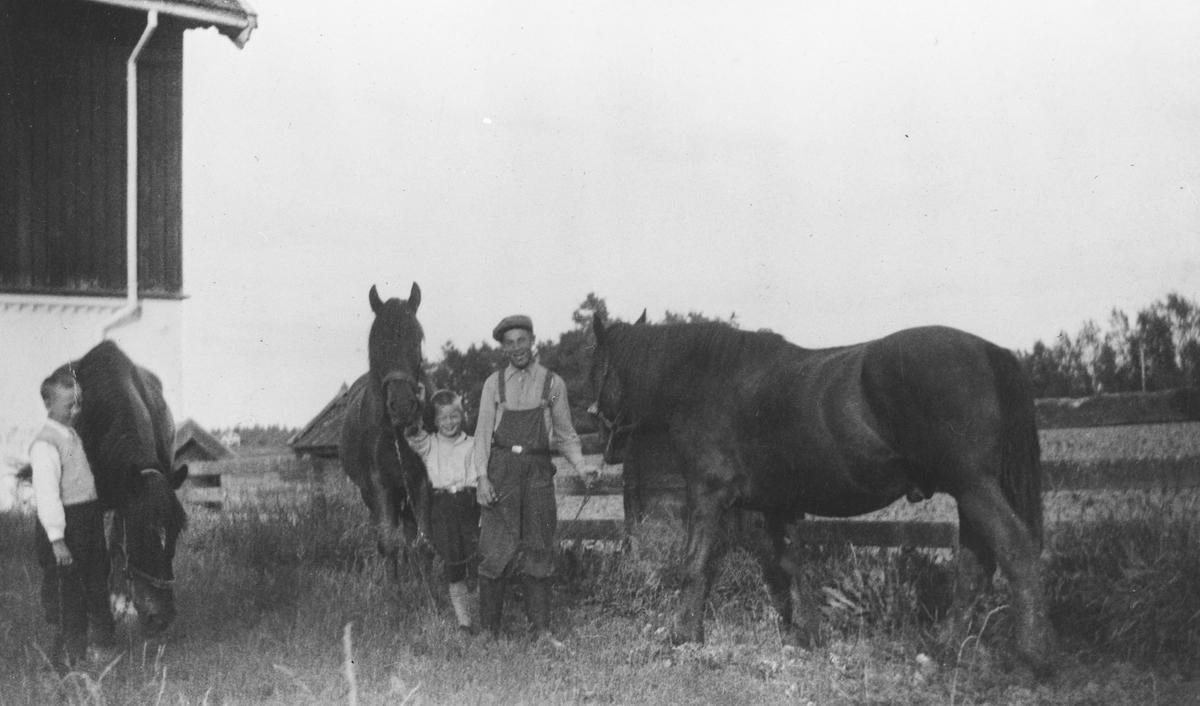 Mikal Stensrud tar hestene inn fra luftegården