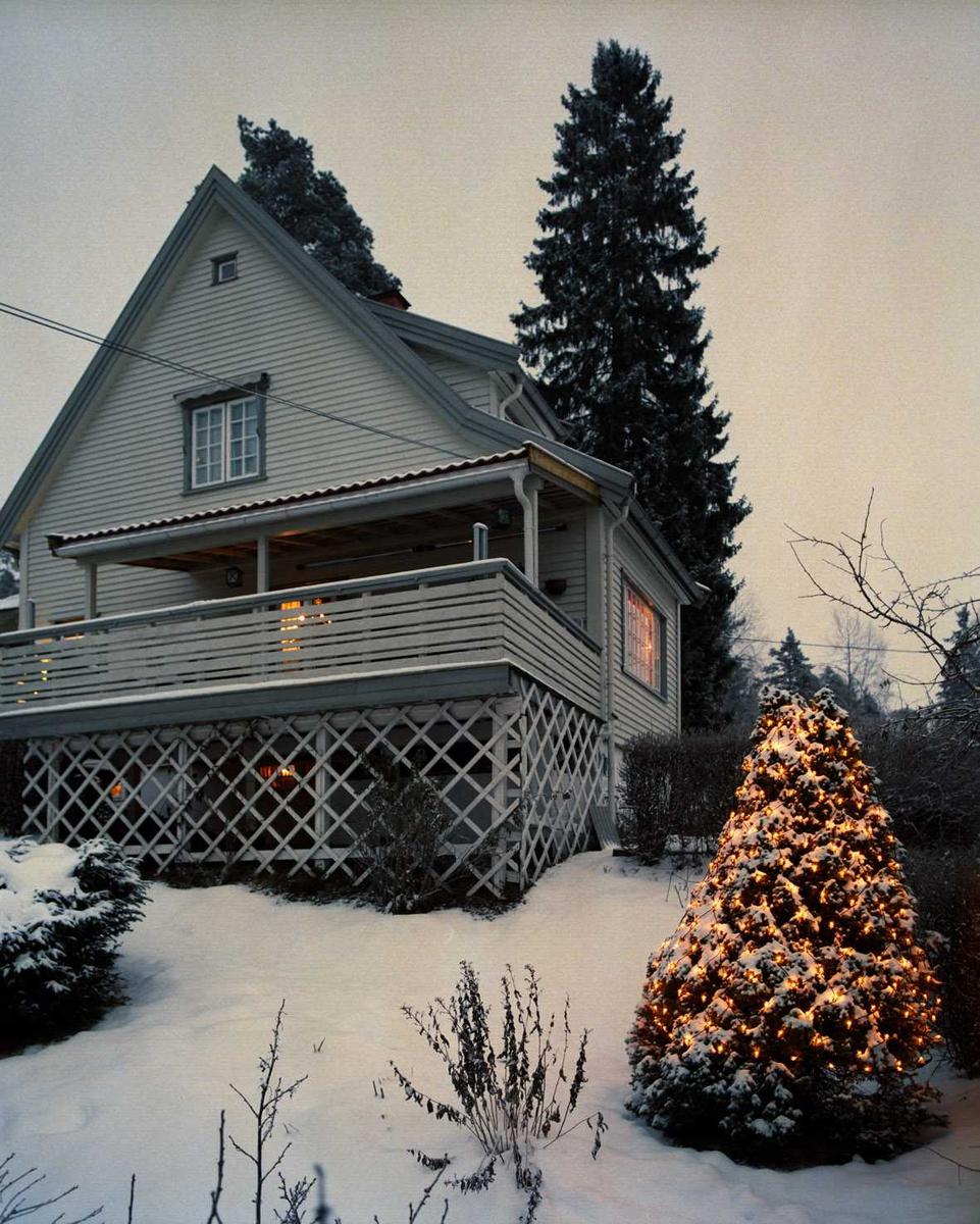 Julebelysning  Hvit julebelysning på liten furu ved enebolig